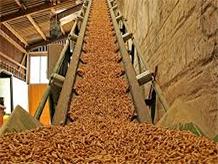 Viên nén từ củi gỗ